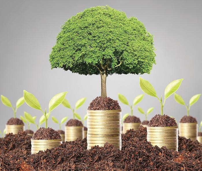 Дерево на монетах